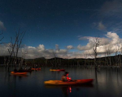 Kayak au clair de lune dans la forêt noyée